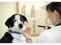 Traumberuf Tierheilpraktiker/in - Die Alternative zum Studium der Veterinärmedizin